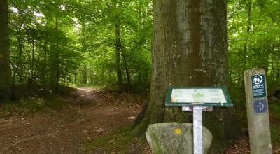 Tolløkke Skov
