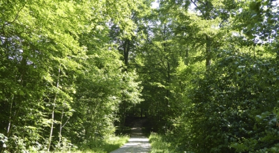 Ringelmose Skov